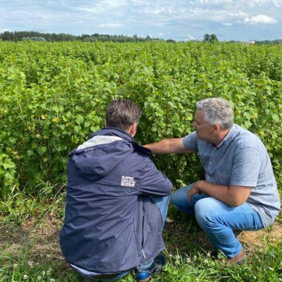 organic blackcurrant grower and benefert