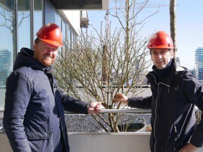 Benefert supplies liquid fertilizers for trees