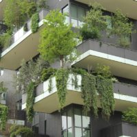 Trees in Trudo tower
