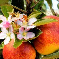 Organic Fertilizers during the growing season