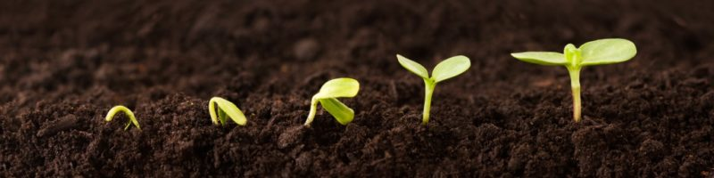 Organic fertilizers ensure long-term soil fertility